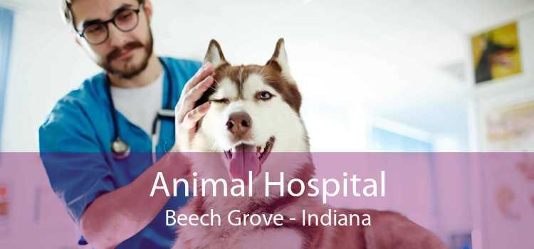 Animal Hospital Beech Grove - Indiana