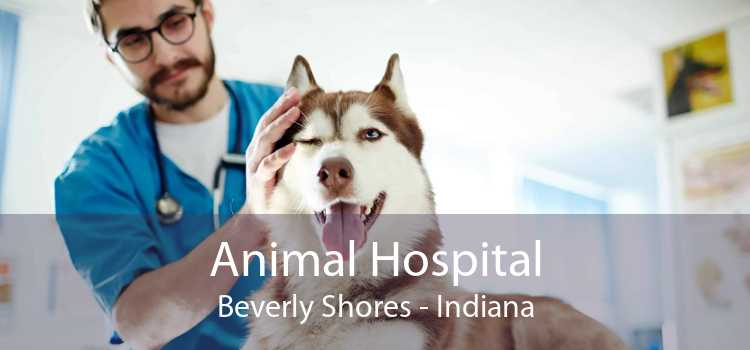 Animal Hospital Beverly Shores - Indiana