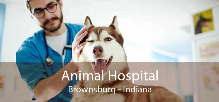 Animal Hospital Brownsburg - Indiana