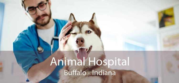 Animal Hospital Buffalo - Indiana