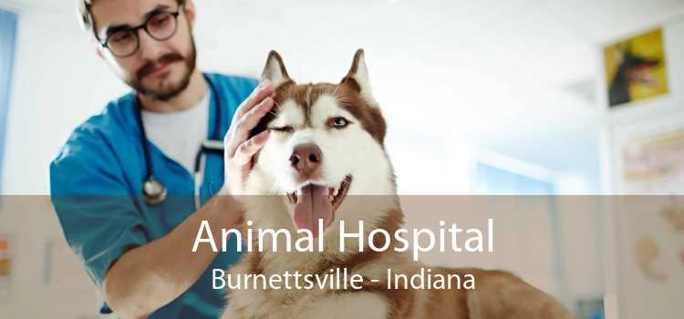 Animal Hospital Burnettsville - Indiana