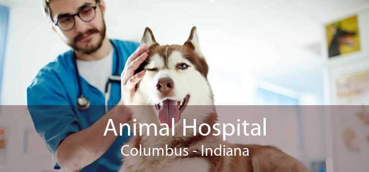 Animal Hospital Columbus - Indiana