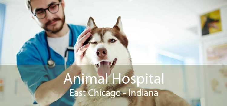Animal Hospital East Chicago - Indiana