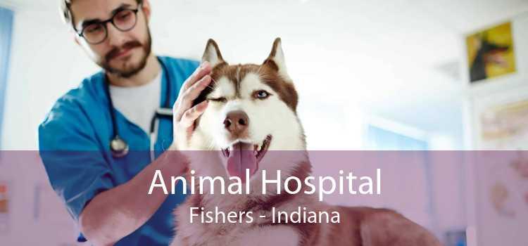 Animal Hospital Fishers - Indiana
