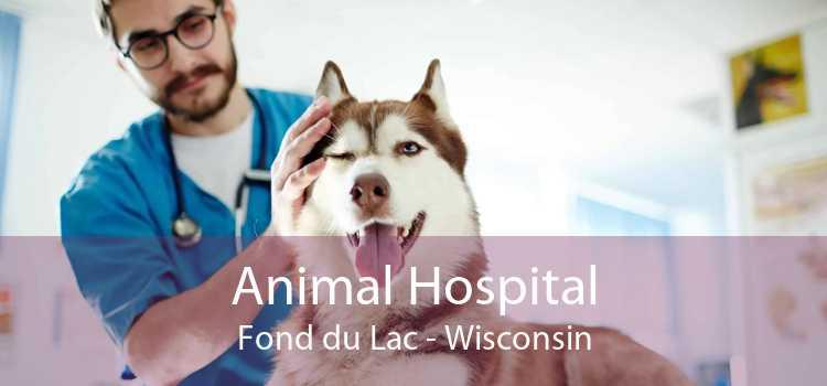 Animal Hospital Fond du Lac - Wisconsin