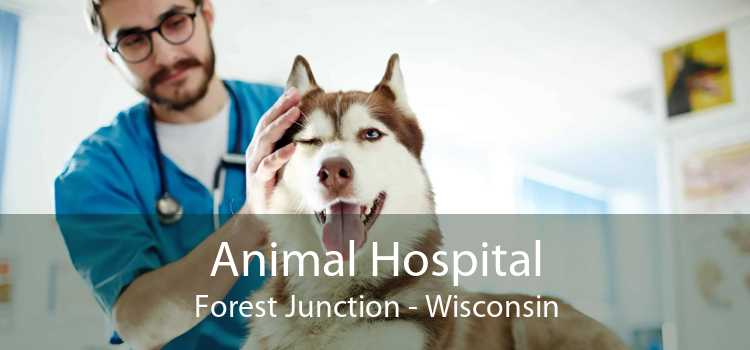 Animal Hospital Forest Junction - Wisconsin