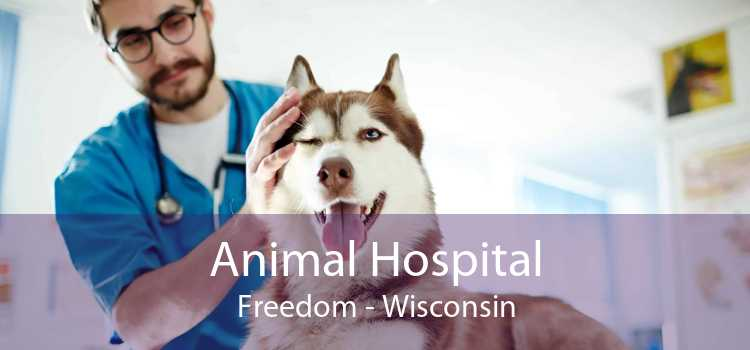 Animal Hospital Freedom - Wisconsin