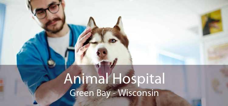 Animal Hospital Green Bay - Wisconsin