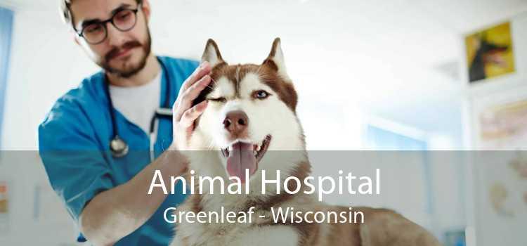 Animal Hospital Greenleaf - Wisconsin