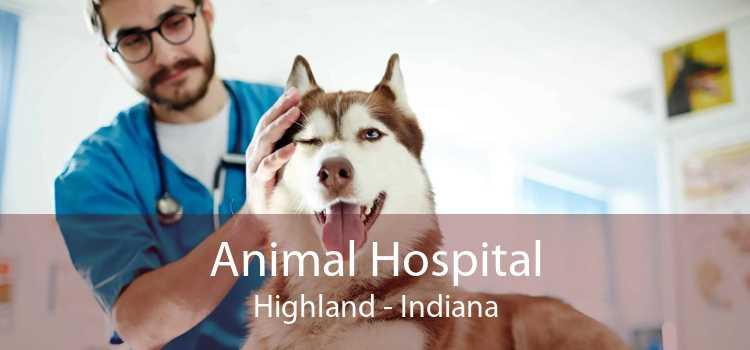 Animal Hospital Highland - Indiana