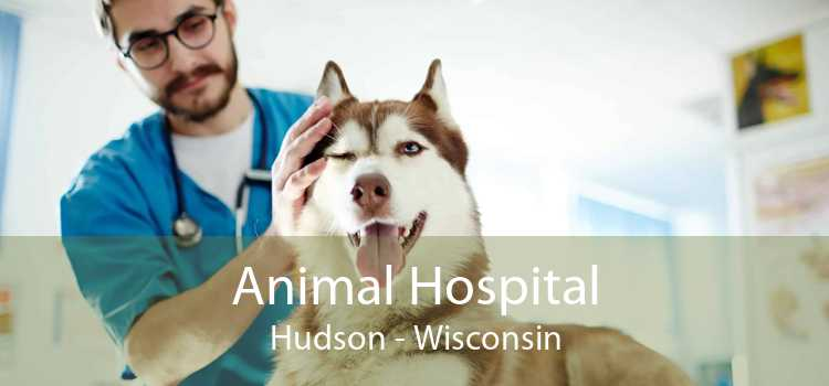 Animal Hospital Hudson - Wisconsin
