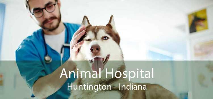 Animal Hospital Huntington - Indiana
