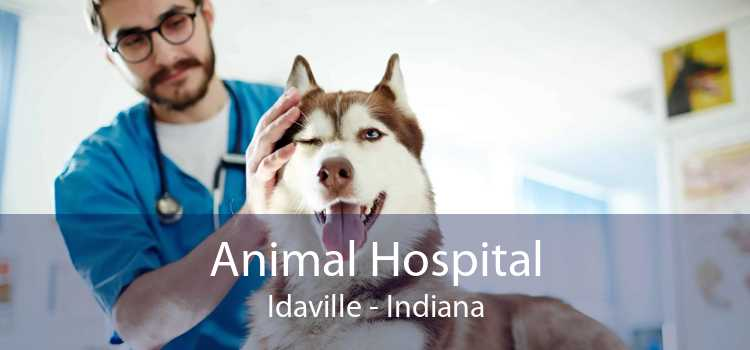 Animal Hospital Idaville - Indiana