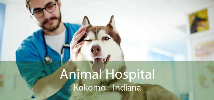Animal Hospital Kokomo - Indiana