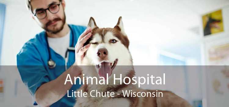 Animal Hospital Little Chute - Wisconsin