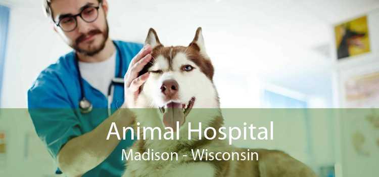 Animal Hospital Madison - Wisconsin