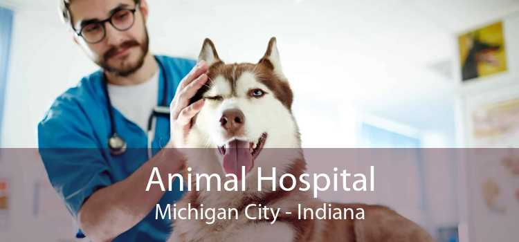 Animal Hospital Michigan City - Indiana