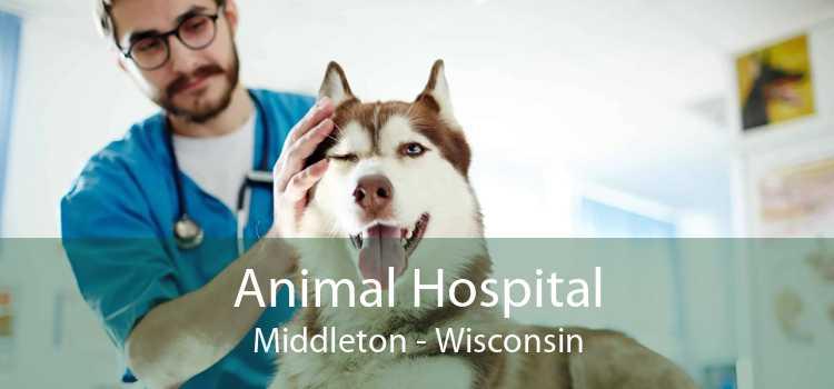 Animal Hospital Middleton - Wisconsin