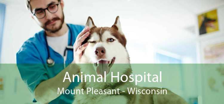 Animal Hospital Mount Pleasant - Wisconsin