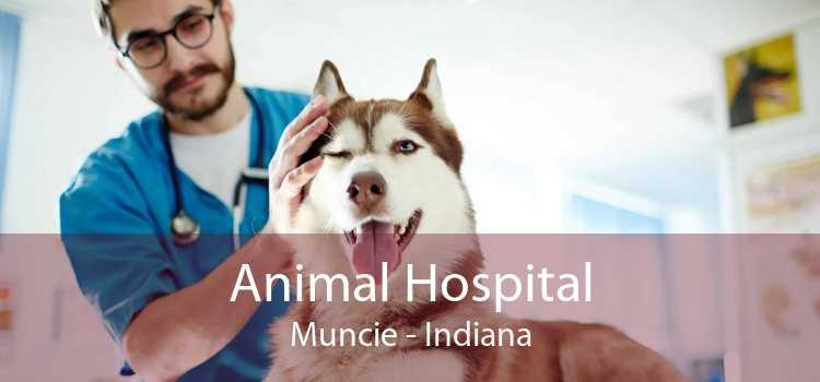 Animal Hospital Muncie - Indiana