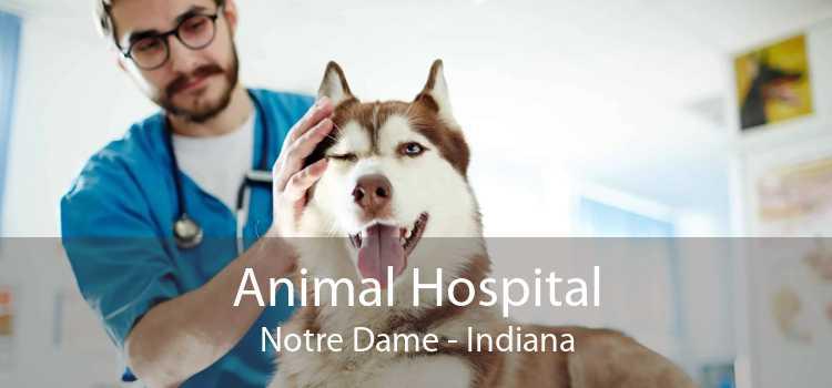 Animal Hospital Notre Dame - Indiana