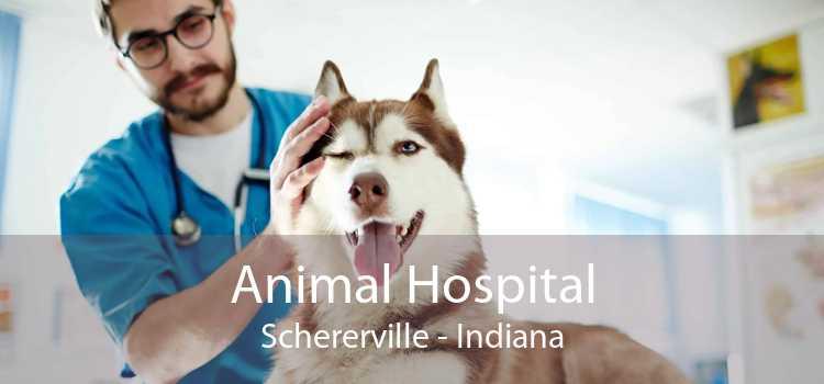 Animal Hospital Schererville - Indiana