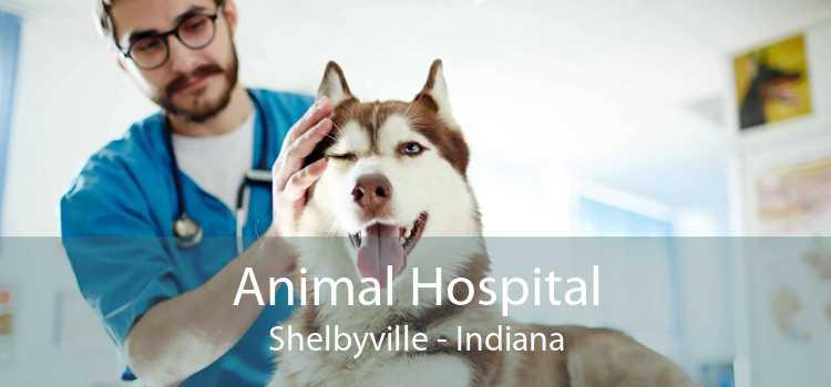 Animal Hospital Shelbyville - Indiana