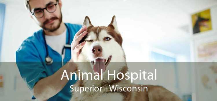 Animal Hospital Superior - Wisconsin