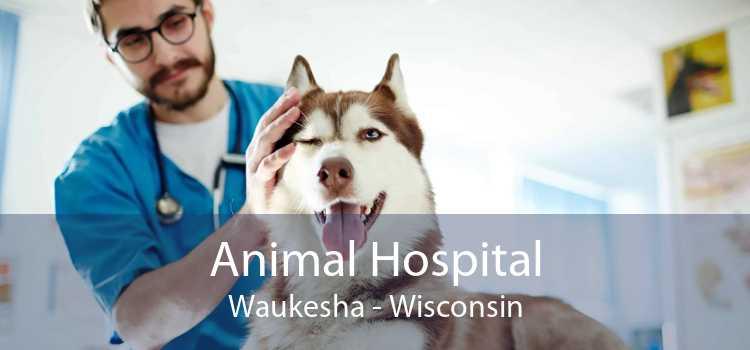 Animal Hospital Waukesha - Wisconsin