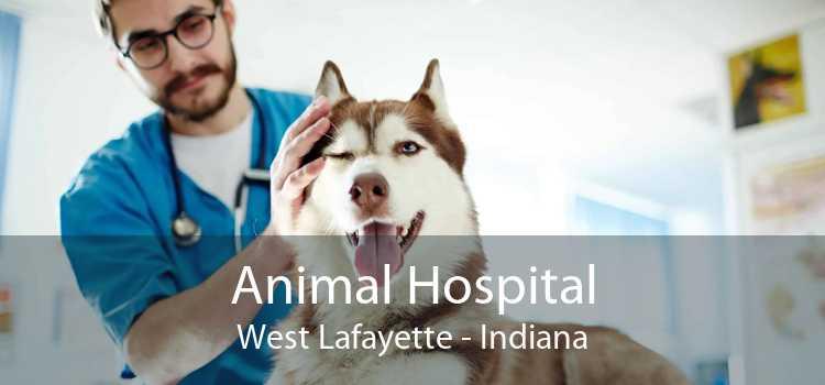 Animal Hospital West Lafayette - Indiana