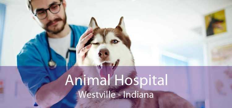 Animal Hospital Westville - Indiana