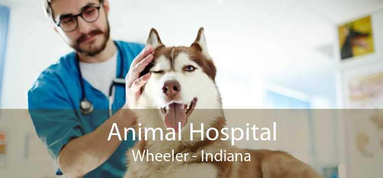 Animal Hospital Wheeler - Indiana