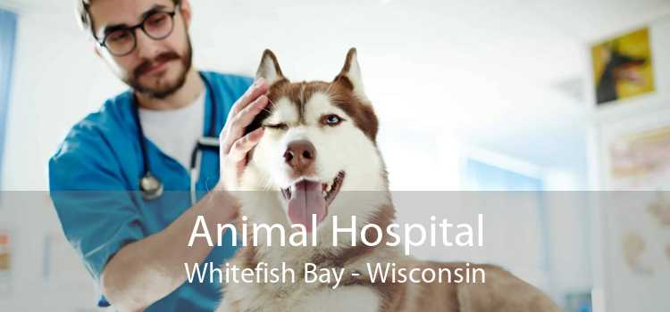 Animal Hospital Whitefish Bay - Wisconsin