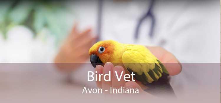 Bird Vet Avon - Indiana