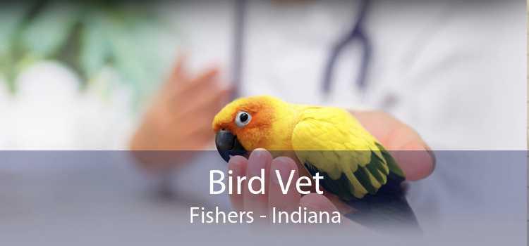 Bird Vet Fishers - Indiana