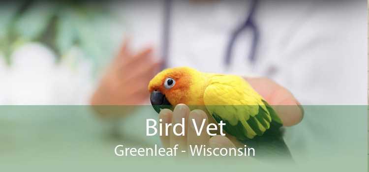 Bird Vet Greenleaf - Wisconsin