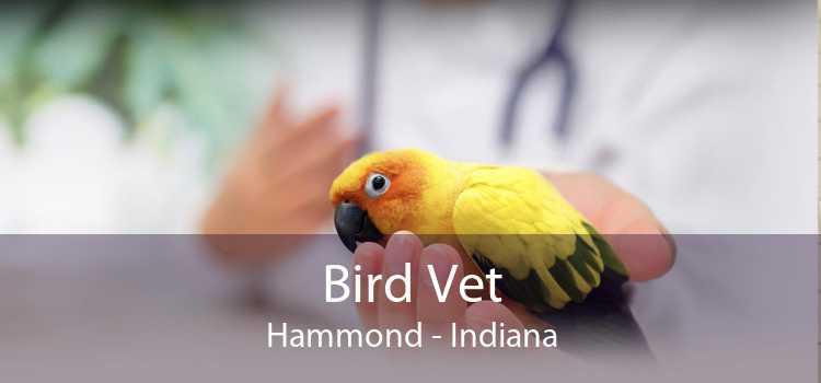 Bird Vet Hammond - Indiana