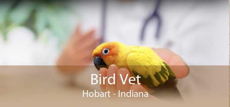 Bird Vet Hobart - Indiana
