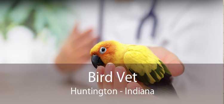 Bird Vet Huntington - Indiana