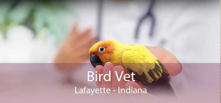 Bird Vet Lafayette - Indiana