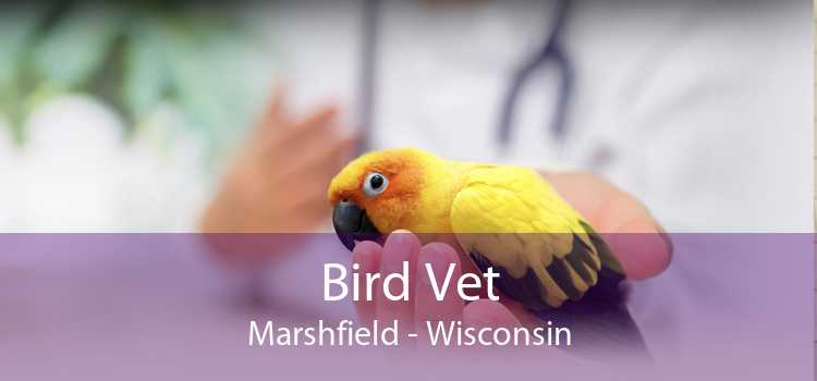 Bird Vet Marshfield - Wisconsin