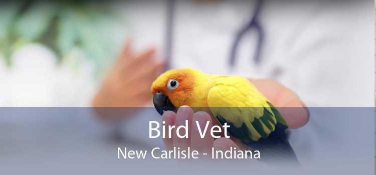 Bird Vet New Carlisle - Indiana