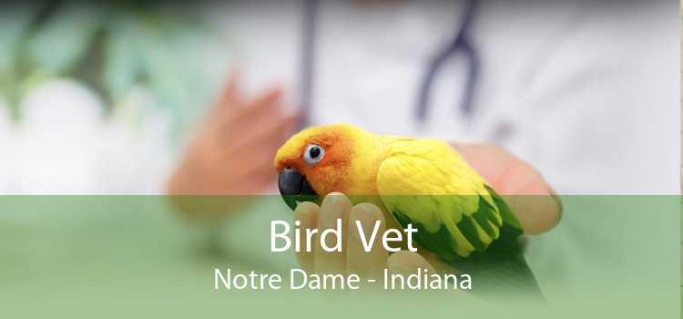 Bird Vet Notre Dame - Indiana
