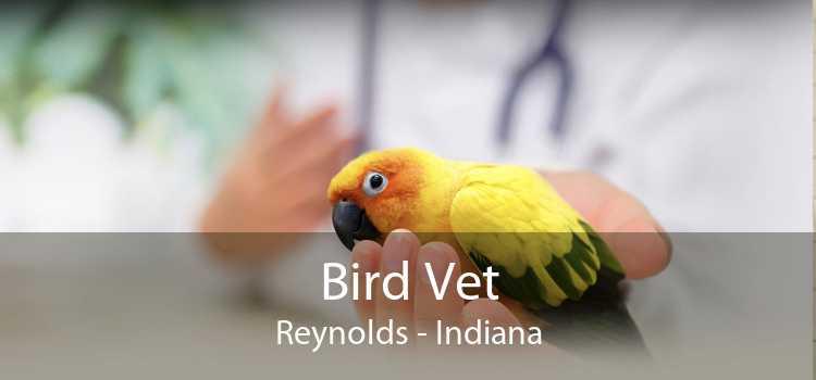 Bird Vet Reynolds - Indiana