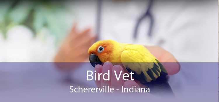 Bird Vet Schererville - Indiana