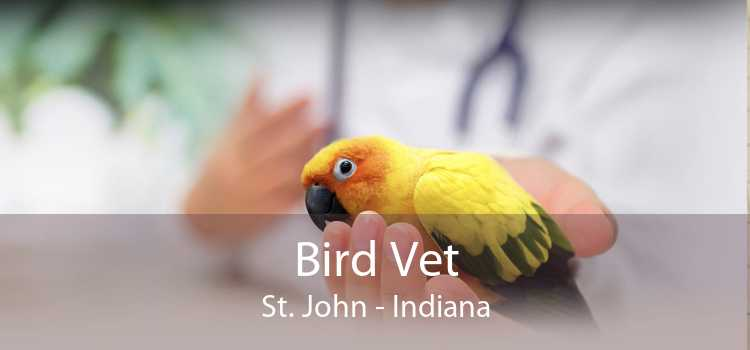 Bird Vet St. John - Indiana