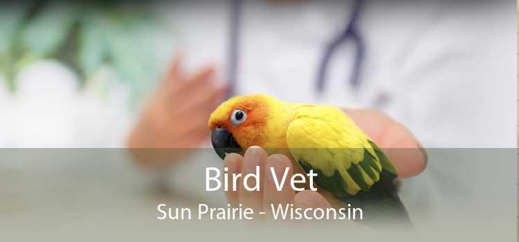 Bird Vet Sun Prairie - Wisconsin