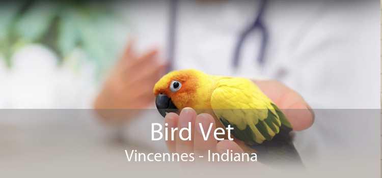 Bird Vet Vincennes - Indiana