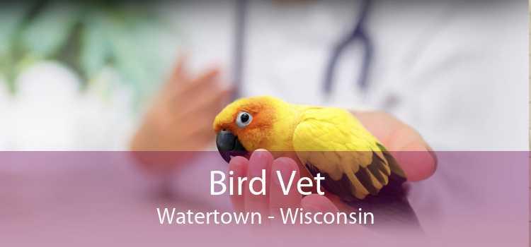 Bird Vet Watertown - Wisconsin