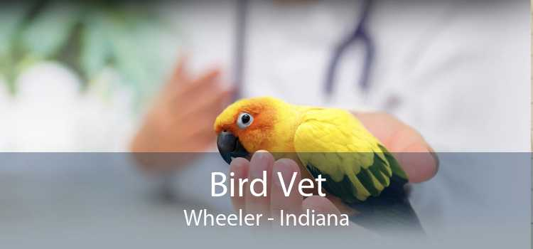 Bird Vet Wheeler - Indiana